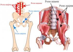 psoas-1