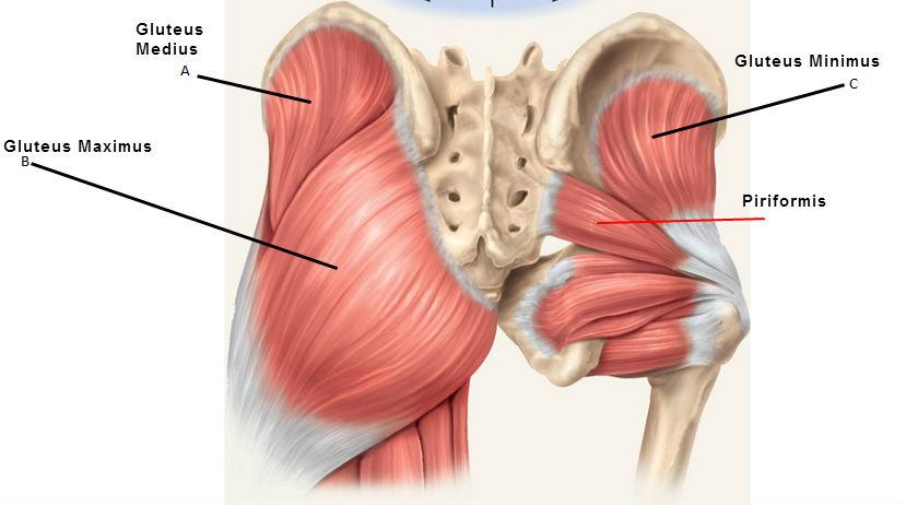 fájdalom a bal csípőízület megterhelése során
